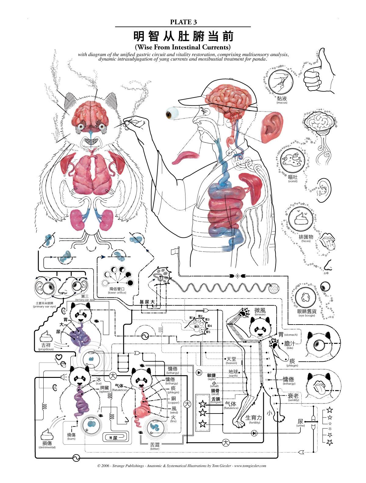 Смотреть урок анатомии 10 фотография