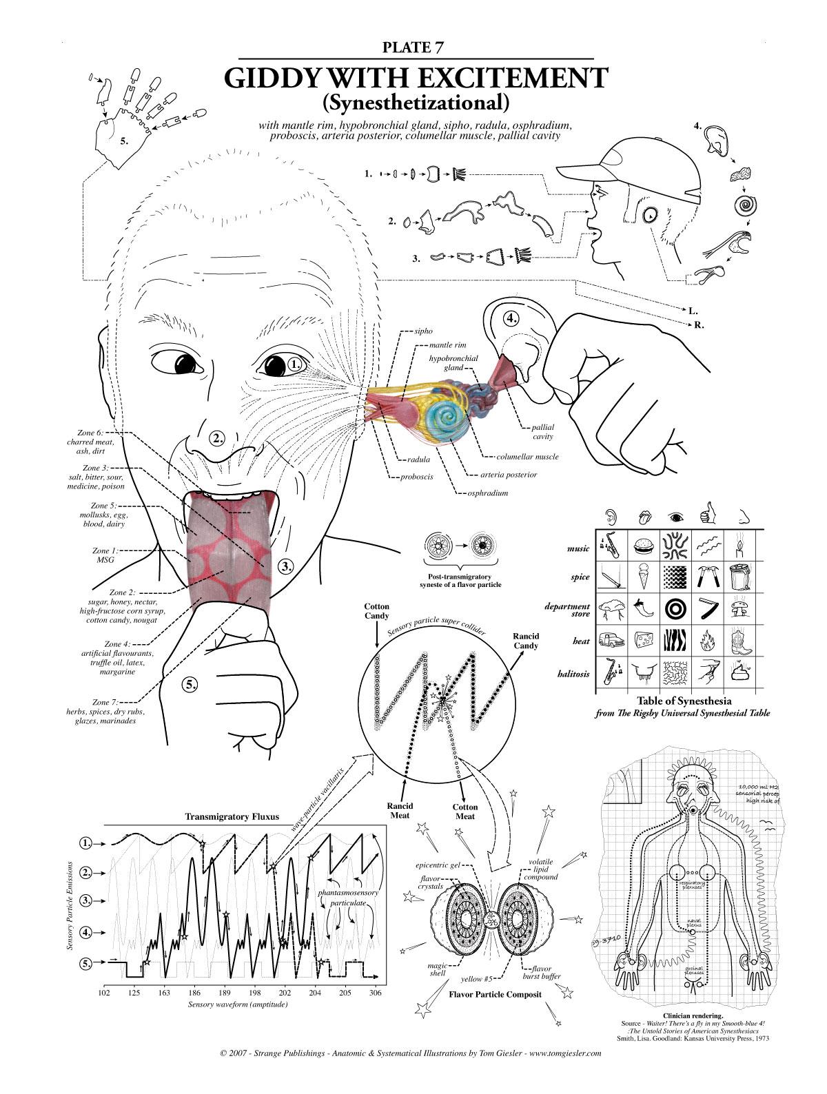 Смотреть урок анатомии 13 фотография